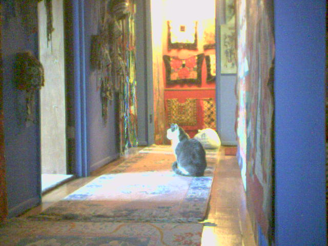 Cats in the hall on Dec 19th at home